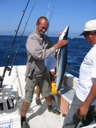 haifiske